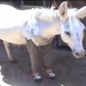 DonkeySuspenders