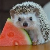Hedgehog Man | Ham Mafia |